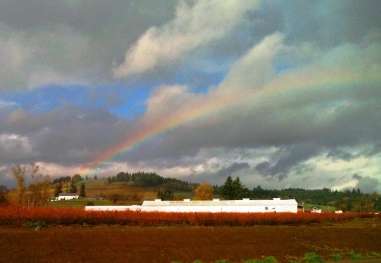 rainbow-nov-7a